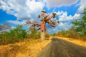 Inchirieri auto Makhado, Africa de Sud