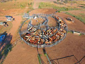 Inchirieri auto Moree, Australia