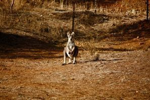 Inchirieri auto Tamworth, Australia
