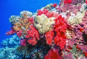Inchirieri auto Coral Coast, Fiji